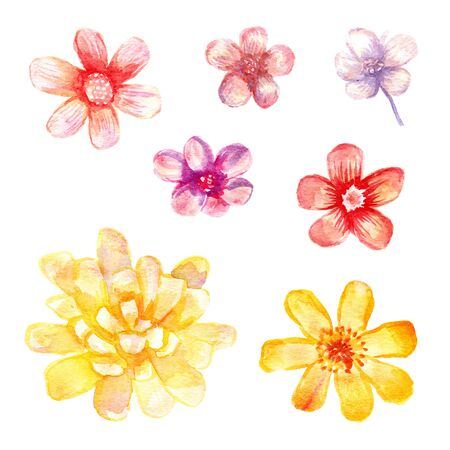 compose: Watercolor flowers set. 7 artistic flowers isolated on white. Compose your decoration.