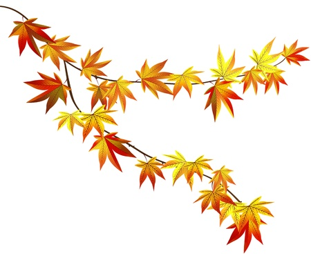 Herfst tak