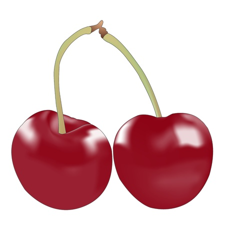 Double cherry on white background Vector