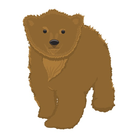 Little bear illustration,isolated on white background   Vector