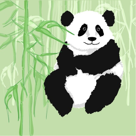 Panda sitting,with bamboo forest as background   Vector