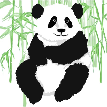 one panda: Panda with bamboo plants,on white background   Illustration