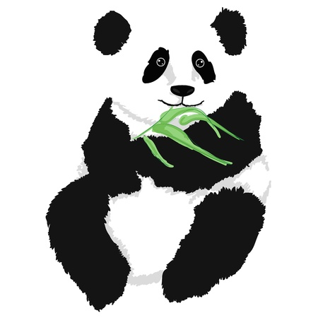 Panda sitting with babmboo branch, on white background   Vector