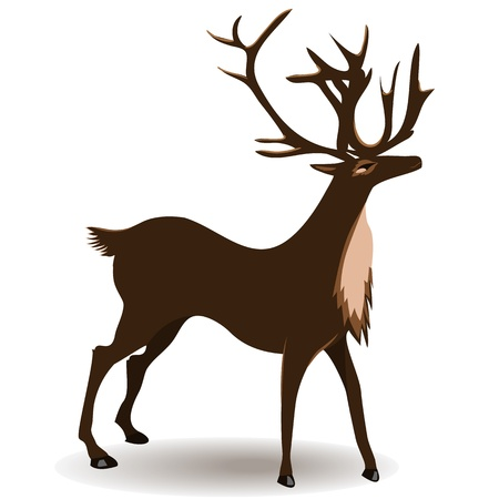 Deer, isolated on white background   Vector