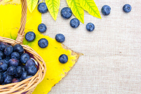 Fresh ripe blueberries in wicker basket on sack cloth  Stock Photo