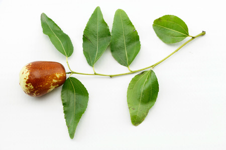 traditional remedy: Jujube fruit closeup on branch with green leaves,isolated on white background Stock Photo