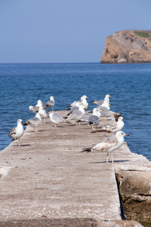 constraction: Some seagulls on concrete dock on the sea.