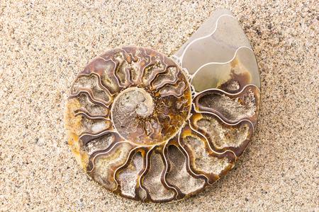 Spiraal fossiel van de ammoniet op zand close-up achtergrond