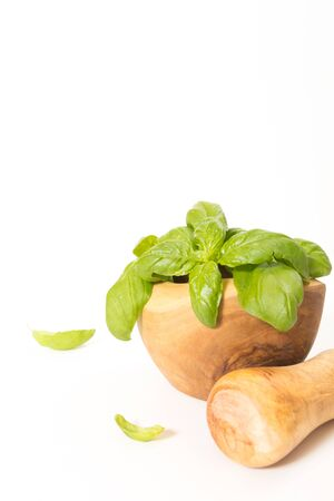 Fresh basil in  wooden mortar with pestle, on withe background.