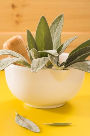 Fresh sage in white ceramic mortar on vivid yellow background.
