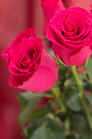 Closeup of red roses bouquet, with red fabric blurred background.