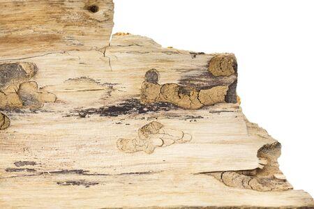 Piece of tree bark,  on white background.