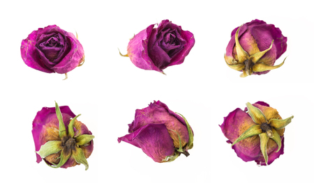 Dry red rosebuds collection, isolated on white background.