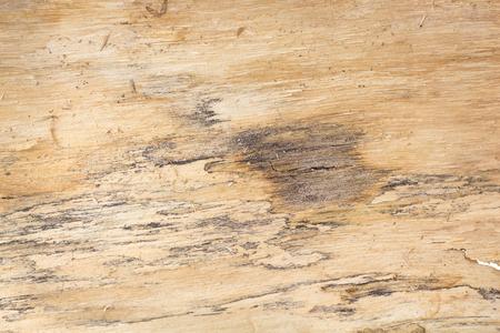Tree bark texturebackground.