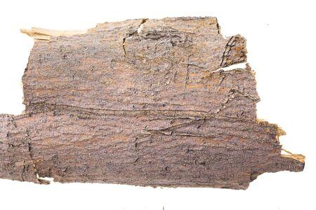 Piece of tree bark, isolated on white background.