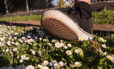 irrespeto: Foot stepping on tiny white yellow daisies on green field.