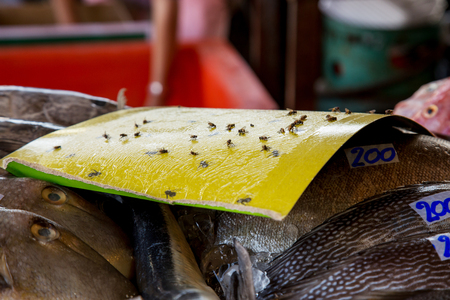 ploy: Protection from flies on food. Trap for flies
