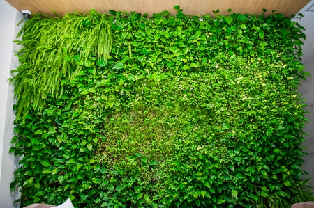 Green wall of different deciduous plants in the interior decoration. Beautiful vivid green leaf wallpaper and environment scene. Banco de Imagens