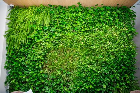 Groene muur van verschillende bladverliezende planten in de binnenhuisinrichting. Mooi levendig groen bladbehang en milieuscène.