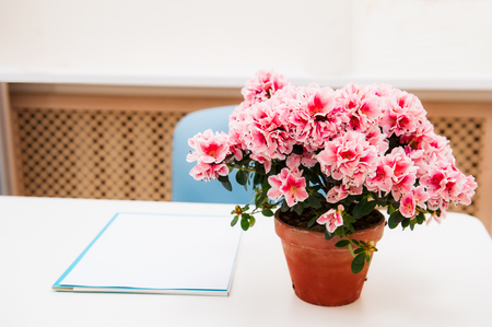 Office workplace with pink Bougainvillea flower in the pot on white desk table. Selective focus.