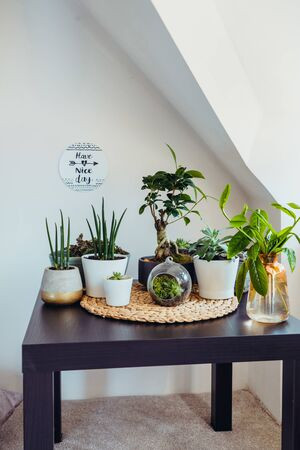 Home gardening concept. Composition of various green air plants, bonsai tree, succulents in pots on the black table. Beige wall background with an inspirational phrase. Modern Attic interior style