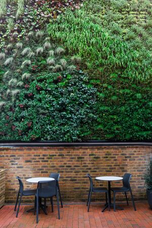 Green wall in loft cafe interior. Eco architecture. Ecology and green living in an urban city environment. An exterior wall covered with a green plant. Abstract background. Vertical card 写真素材