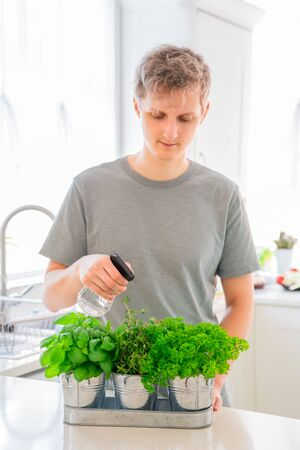 Young Man watering home gardening on the kitchen. Pots of herbs with basil, parsley and thyme. Home planting and food growing. Sustainable lifestyle, plant-based foods. Selective focus. Copy space.