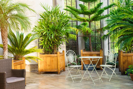 Metal garden furniture, stools and table standing in tropical plants orangery with palms in wooden flowerbeds. Relaxing time in biophilic interior style. Greenhouse cafe concept. Copy space Archivio Fotografico