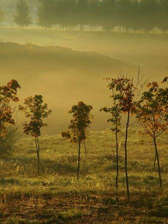autumn fog Stock Photo - 543154