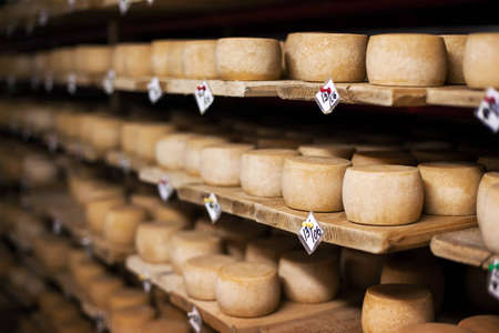 milk cheese: Cow milk cheese, stored in a wooden shelves and left to mature