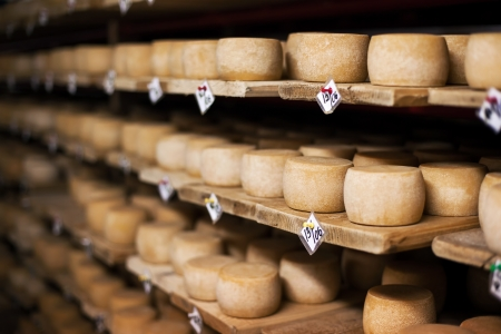 queso: Queso de leche de vaca, almacenamiento en un estantes de madera y se deja madurar Foto de archivo