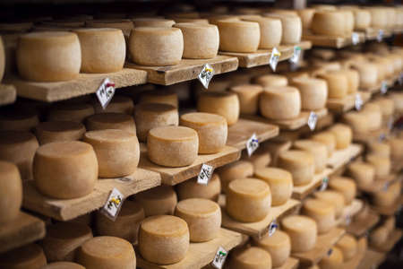 factory farm: Cow milk cheese, stored in a wooden shelves and left to mature