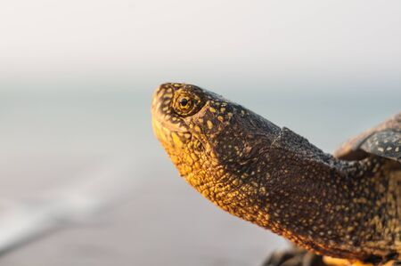 slow motion: Portrait of a turtle in the profile on the seashore Stock Photo