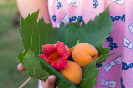 Little girl holding  in hands  grenn leaf with apricotsand flower.