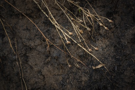 Dry flowers on the background of the scorched field Stock Photo