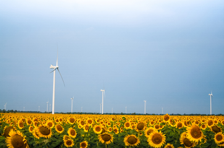 Windmills in the field with sunflower blossoms Imagens