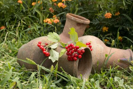 the milk jug: milk Jug for the summer garden Stock Photo