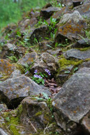 marge: forest violet