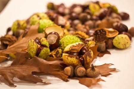 castaas: castañas de otoño Foto de archivo
