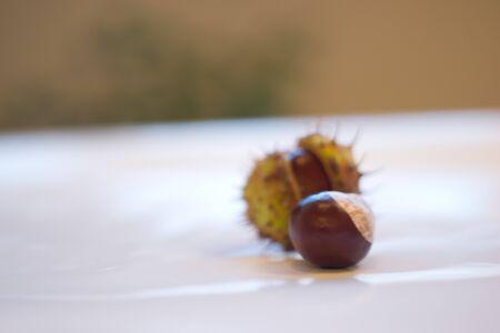 castaÑas: castañas de otoño Foto de archivo