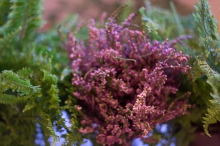 heather: Bouquet of Heather Ledum Stock Photo