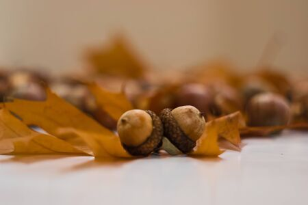 acorns: acorns Stock Photo