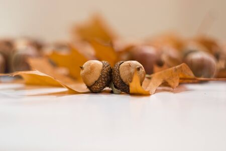 stillife: acorns Stock Photo
