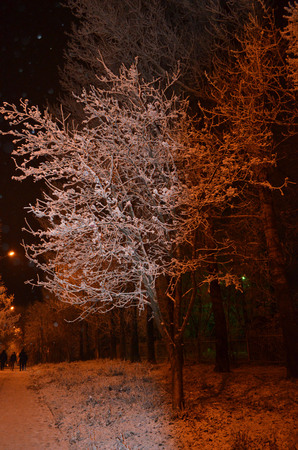 a tree in the snow and frost in the winter in the light of lanterns