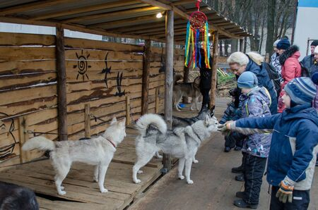 Vladimir, Russia November 10,2018, Mira Street, Central Park of Culture and Recreation, Husky House, dogs on the street