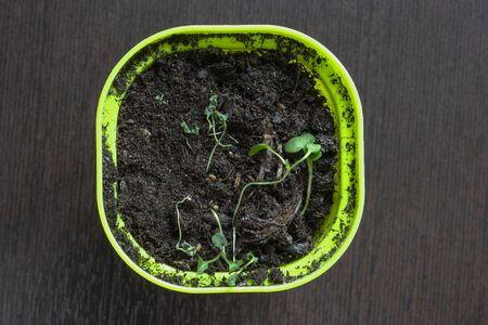pot with dead seedlings planted in peat 版權商用圖片