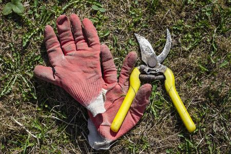 Red gloves and old yellow pruner lying on the ground