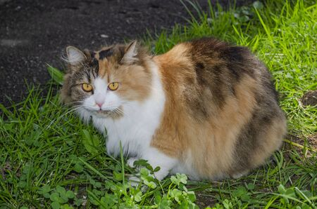 A motley red-and-white cat sits warily in the grass.