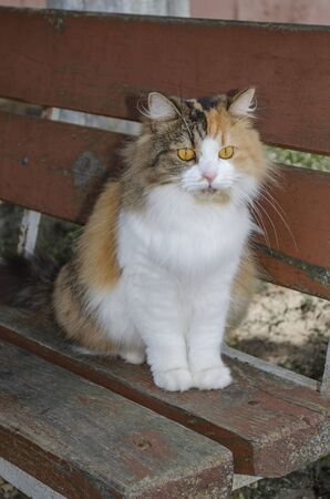 A motley red-white cat with yellow eyes sits on a bench and look forward