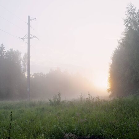 Felling with high voltage wires in the setting sun and fog